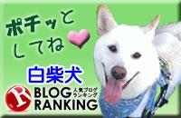 人気ブログランキング「白柴犬」カテゴリー投票