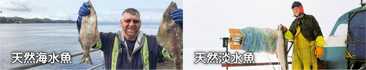 アカナで使用する海水魚、淡水魚の漁師達