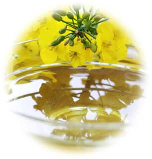 キャノーラ油(菜種油)