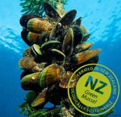 ニュージーランド緑イ貝