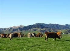 ニュージーランドの牧畜環境
