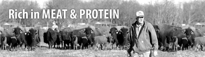 豊富な肉とタンパク質