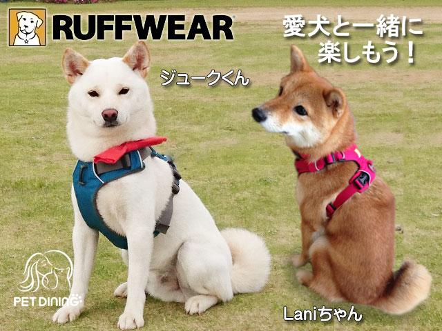 愛犬と一緒に楽しもう! フロントレンジハーネス(ジュークくん、Laniちゃん)