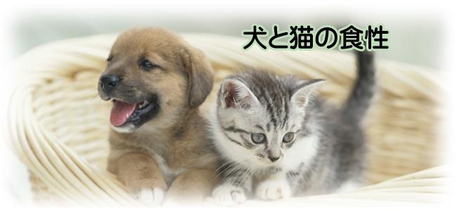 犬と猫の食性