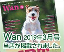 Wan2019年3月号掲載されました