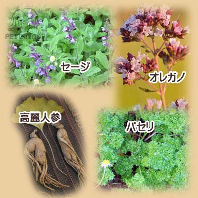 野菜・果物・ハーブや薬草